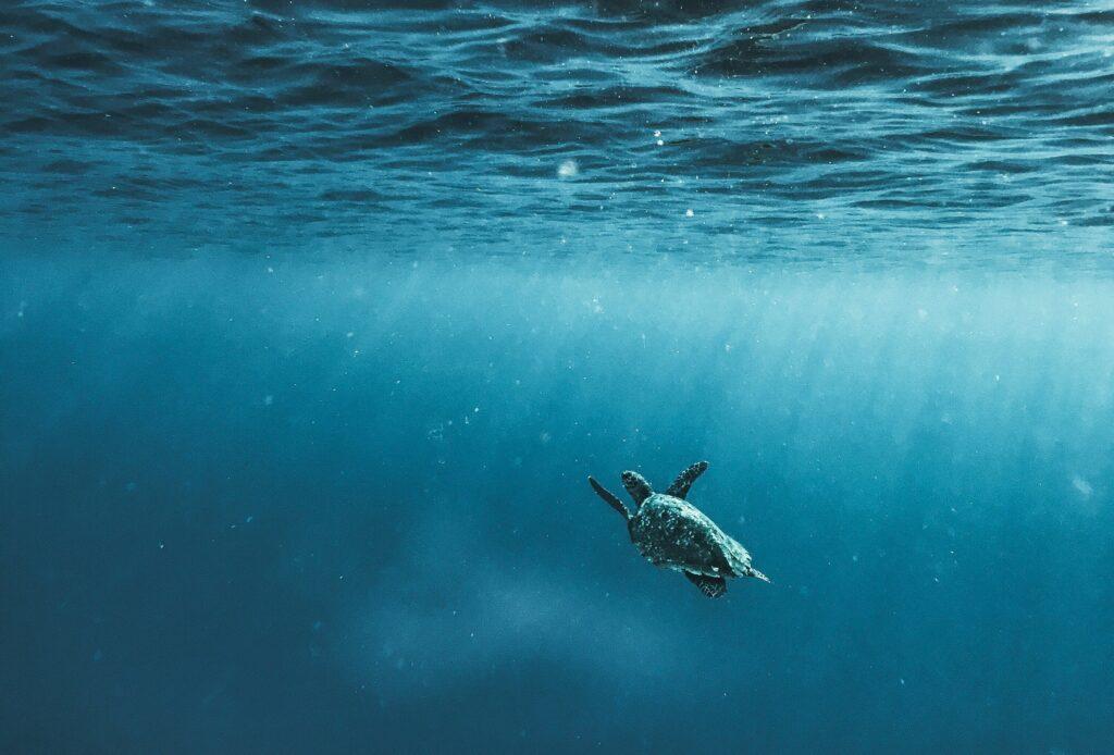 Schildkröte im Meer, Texterin für Nachhaltigkeit